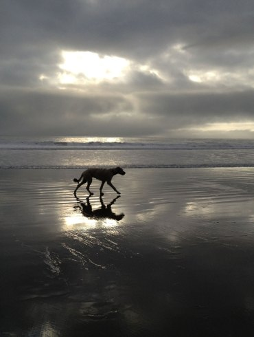 Pam's dog walking on beach