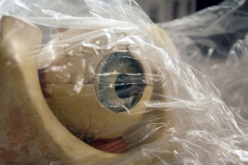 Human eye model in bag