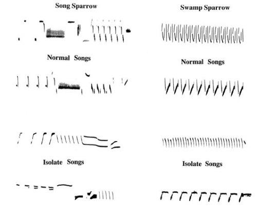 Varied sonograms.
