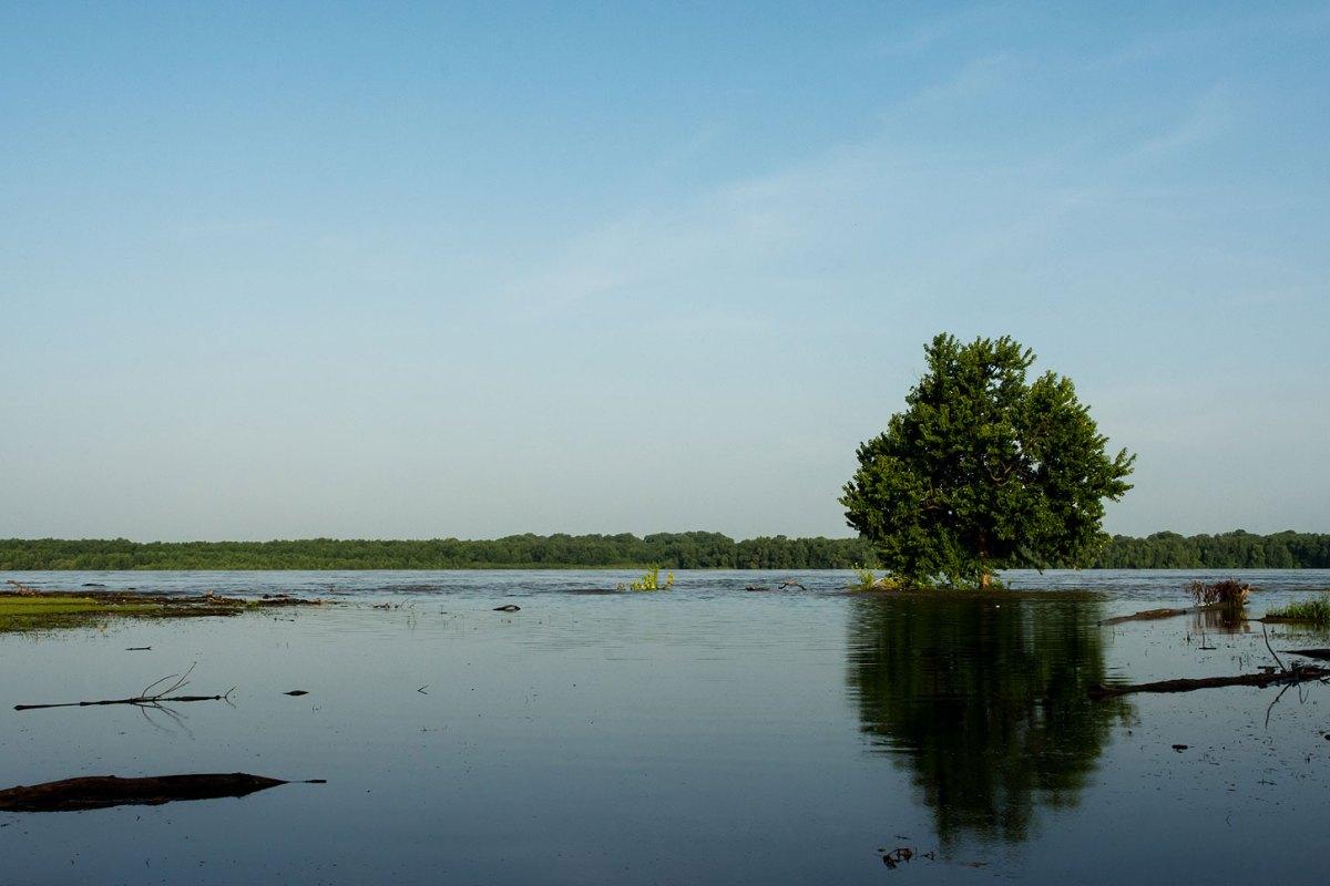 Tree along flooded river floodplain