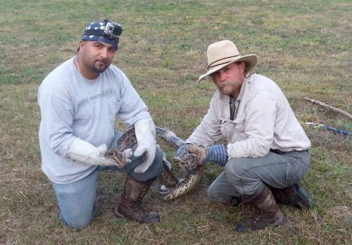 A volunteer from the Swamp Apes and Tom Rahill (right) hold a Burmese python caught in the wild. Photo courtesy The Swamp Apes.