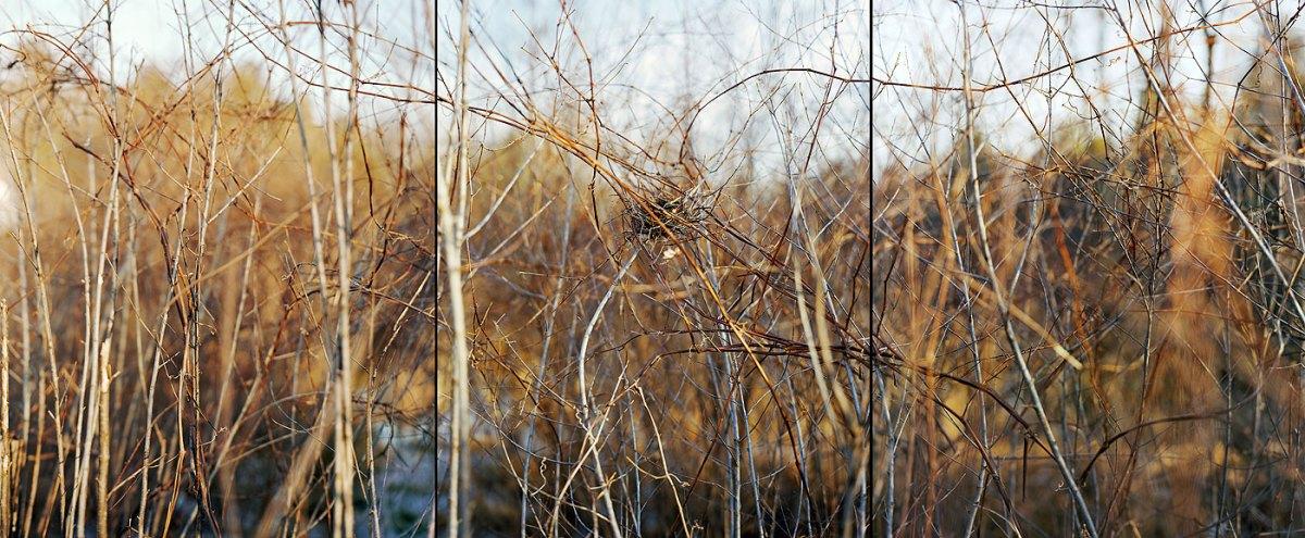Nest, 2006, by Barbara Bosworth
