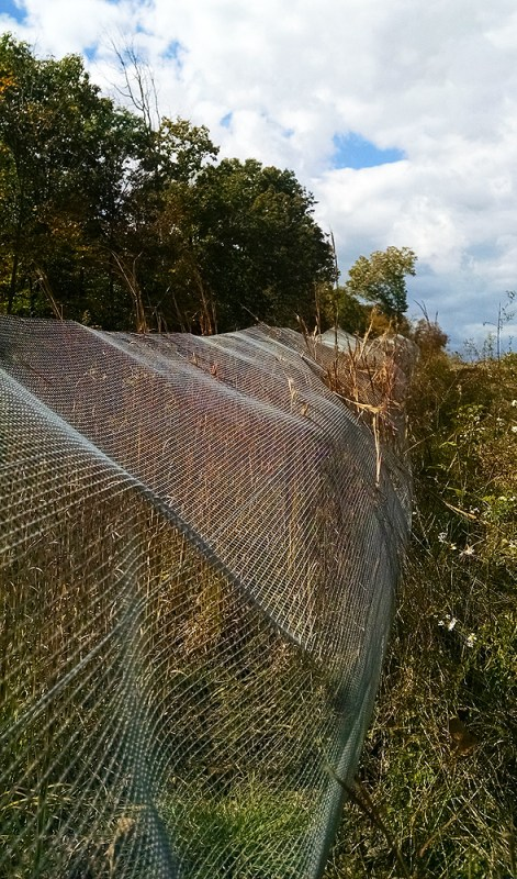 Snake fence. Photo by Elizabeth Dodd.