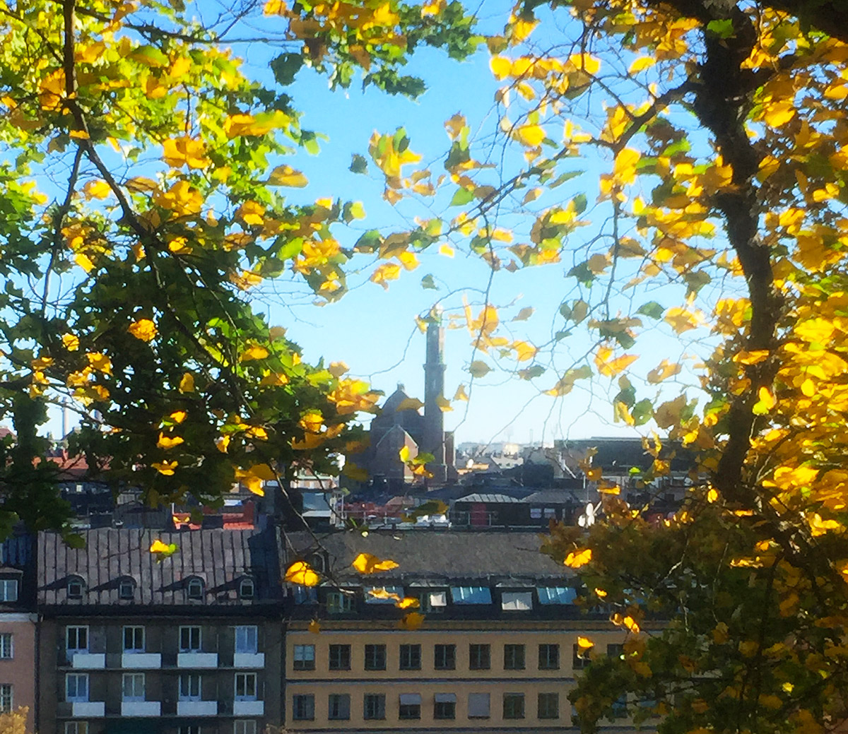 Stockholm skyline and autumn trees