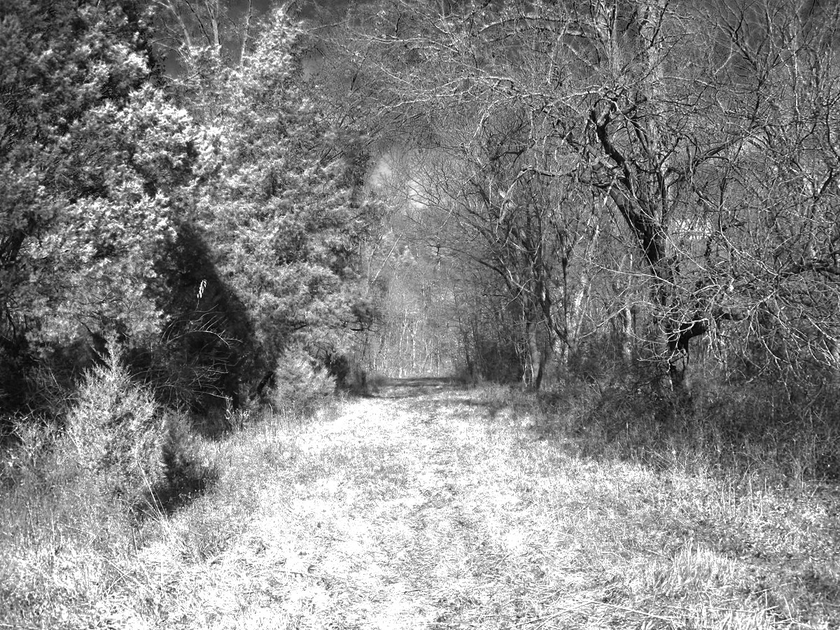 A trail through the woods at Route 66 State Park. Photo by Jennie Goode.