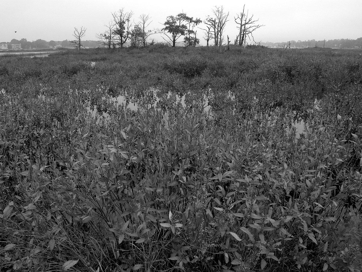Tupelo line. Photo by Elizabeth Rush.