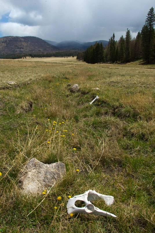 The Valles Caldera during the summer monsoon, with elk bones