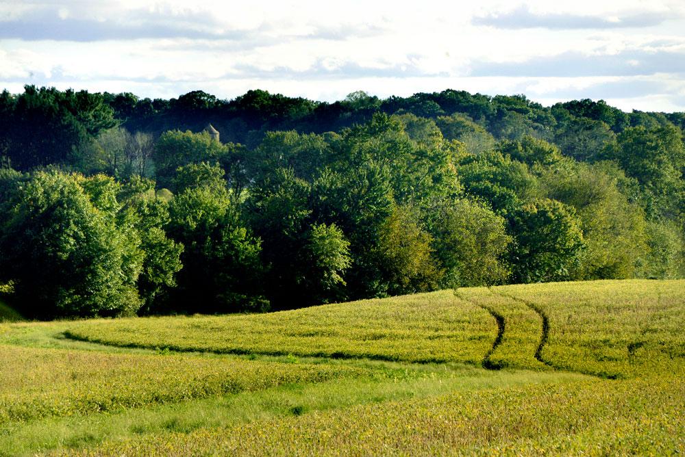 Shepherd's Hey Farm field.