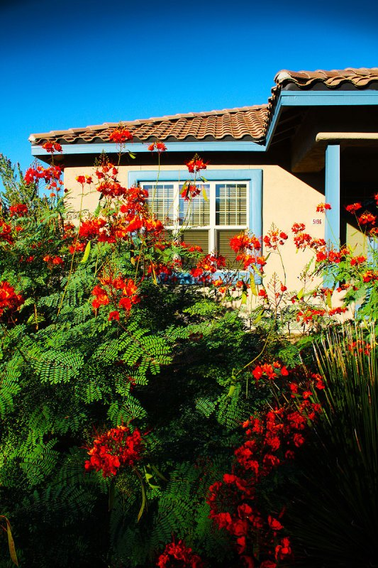 University bungalow with blooms