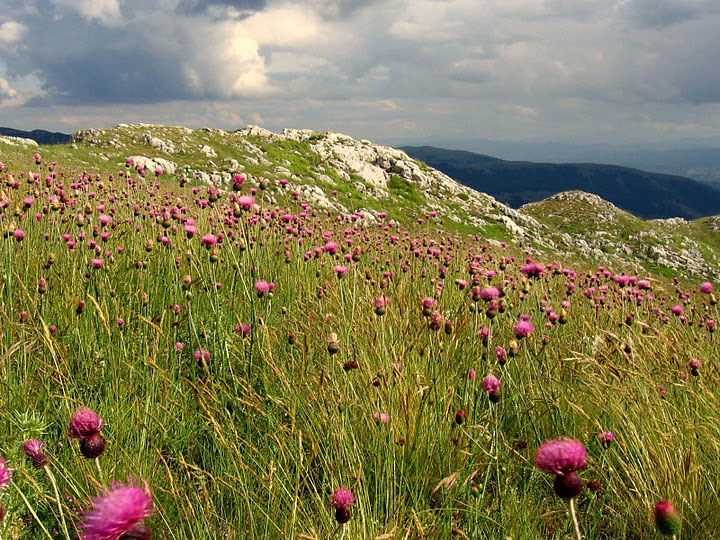 Wildflowers in the Karst country. Photo by Julian Hoffman.