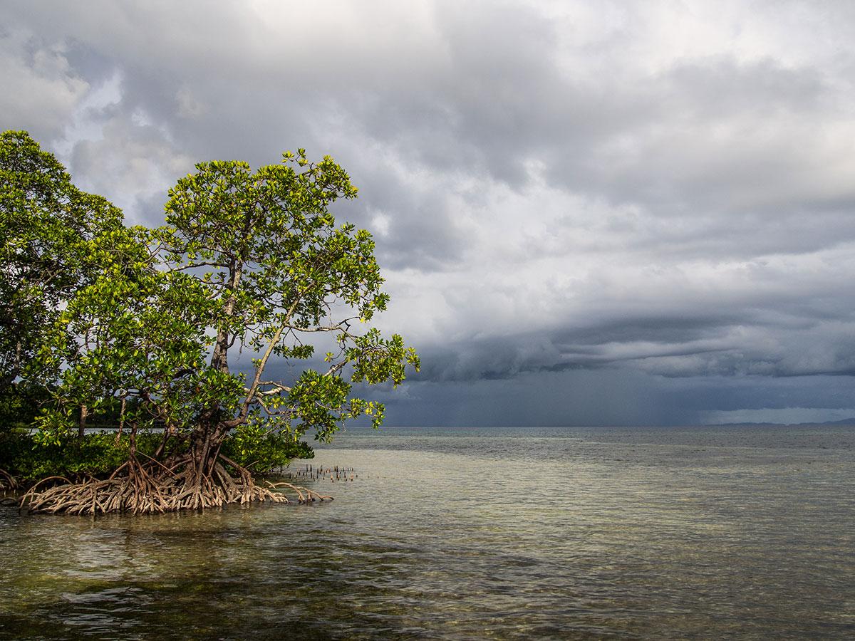 Shoreline on Bangka, Indonesia. Photo by Julian Hoffman.