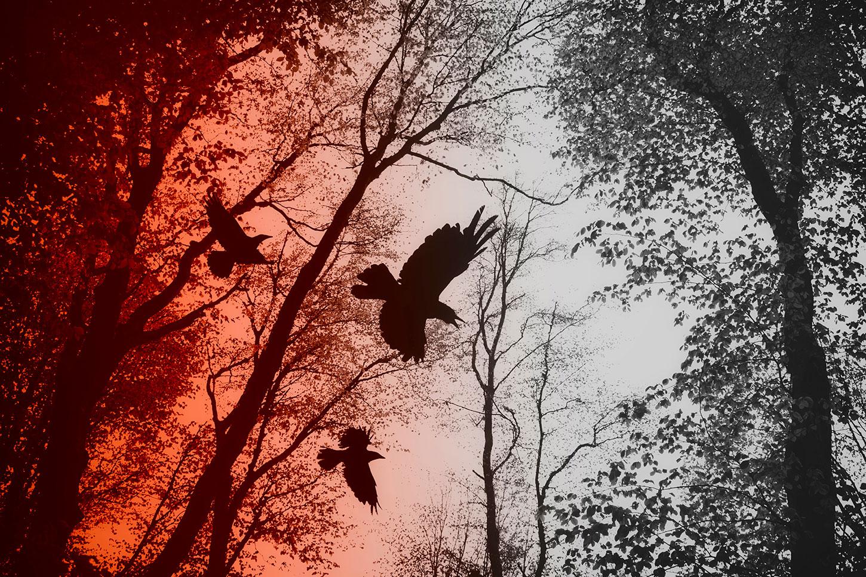 Like a Crow, an Excerpt by Kim Eisele