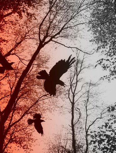 Like a Crow, an Excerpt by Kim Eisele