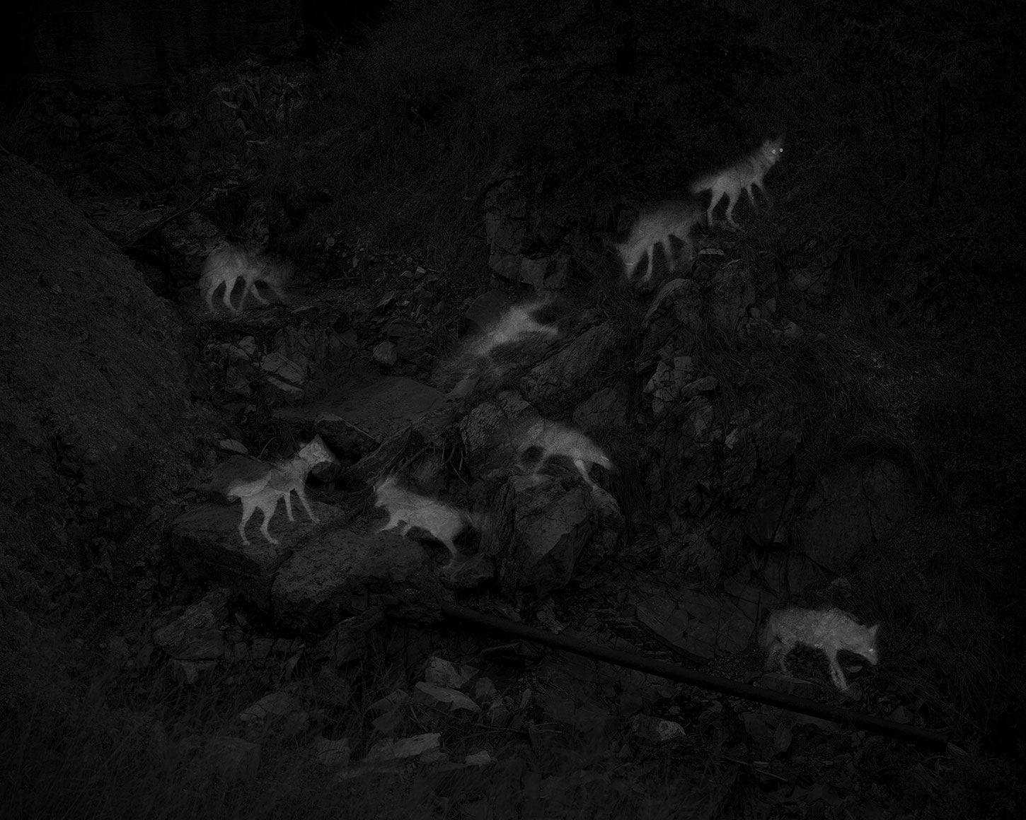 8 Captures of 2 Coyotes, by Alex Turner