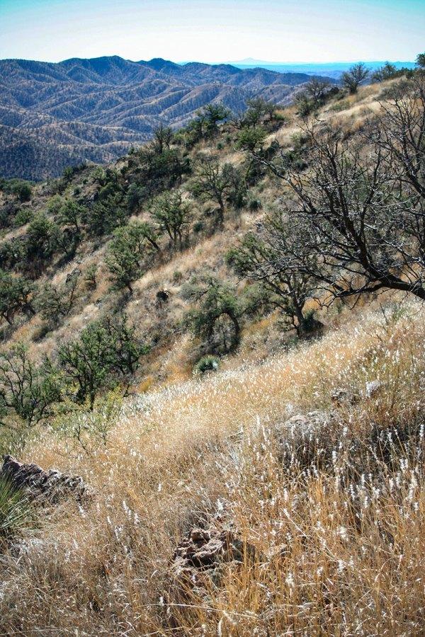 Atscosa grasslands