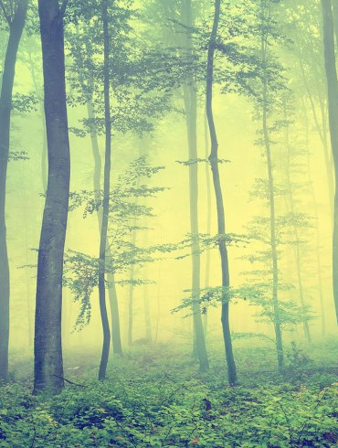 Forest with saplings and fog