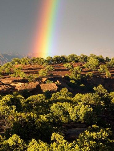 Pinon-juniper forest, Southern Utah