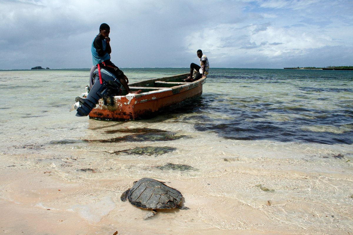 Sea turtle on beach with Kenyan fishermen in boat. Photo by Amy Yee.