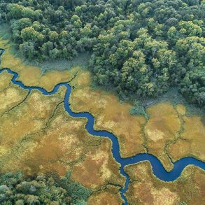 Aerial view of creek in salt marsh with trees