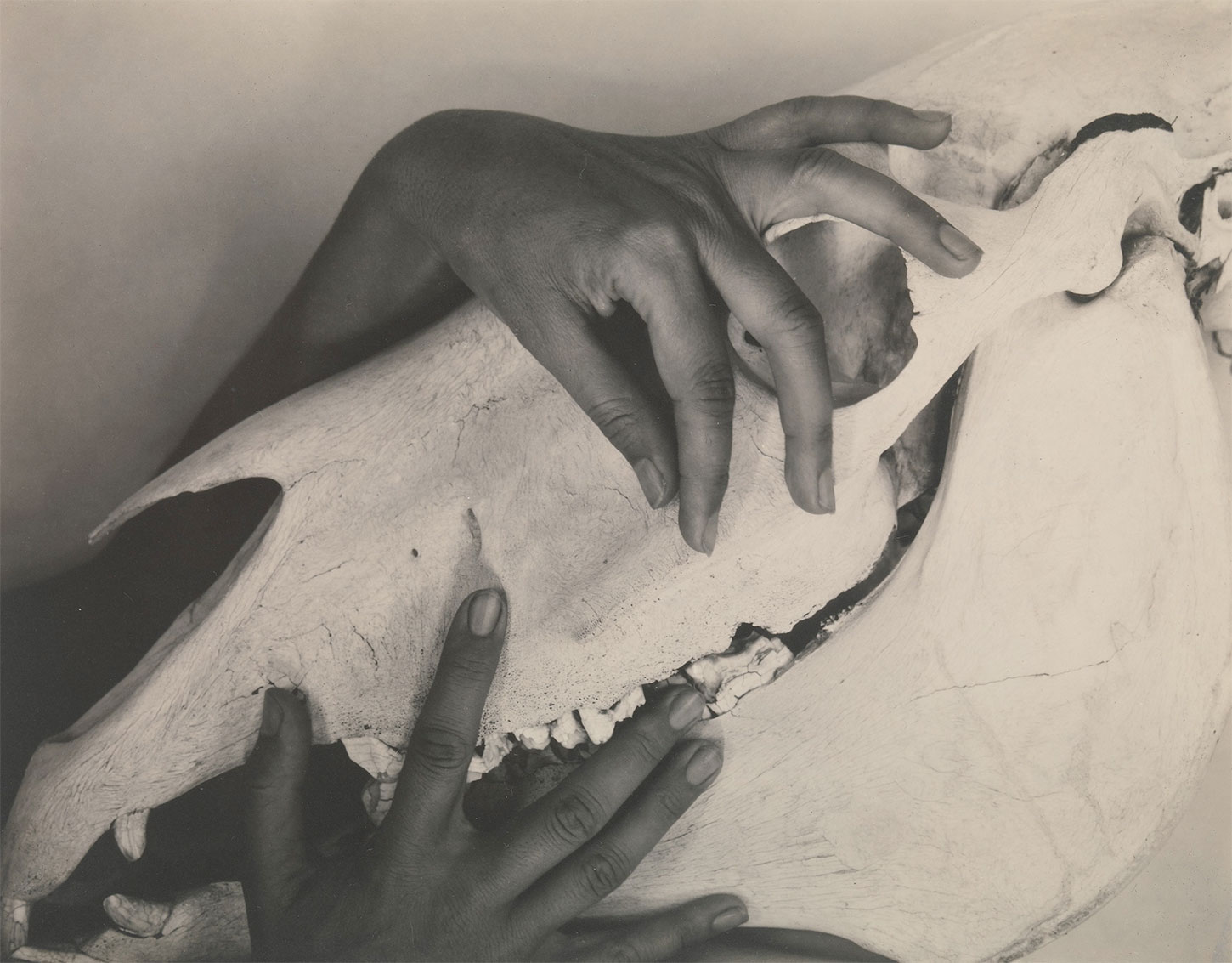 Photograph of Georgia O'Keeffe's Hands and Horse Skull, 1931.