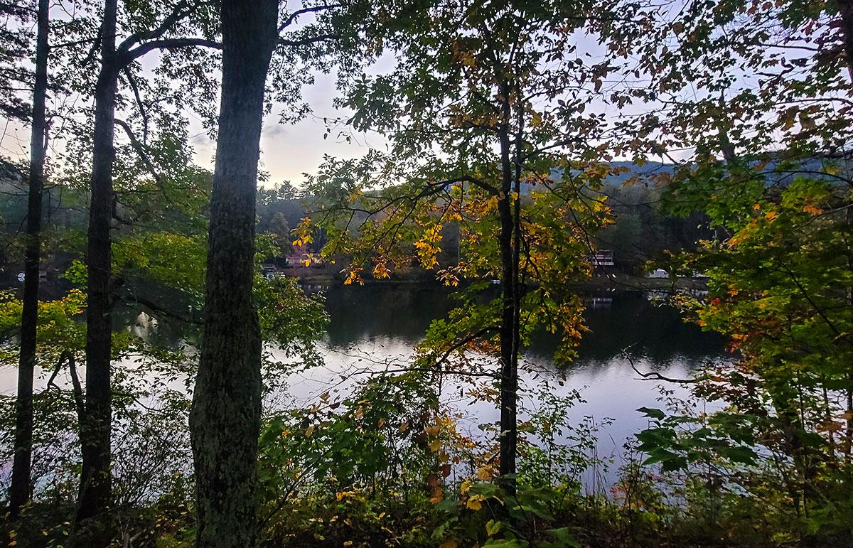 Lake viewed through trees