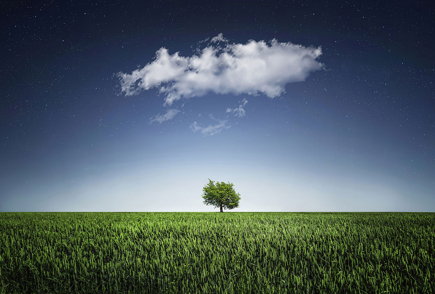 Single tree on flat landscape with cloud and night sky