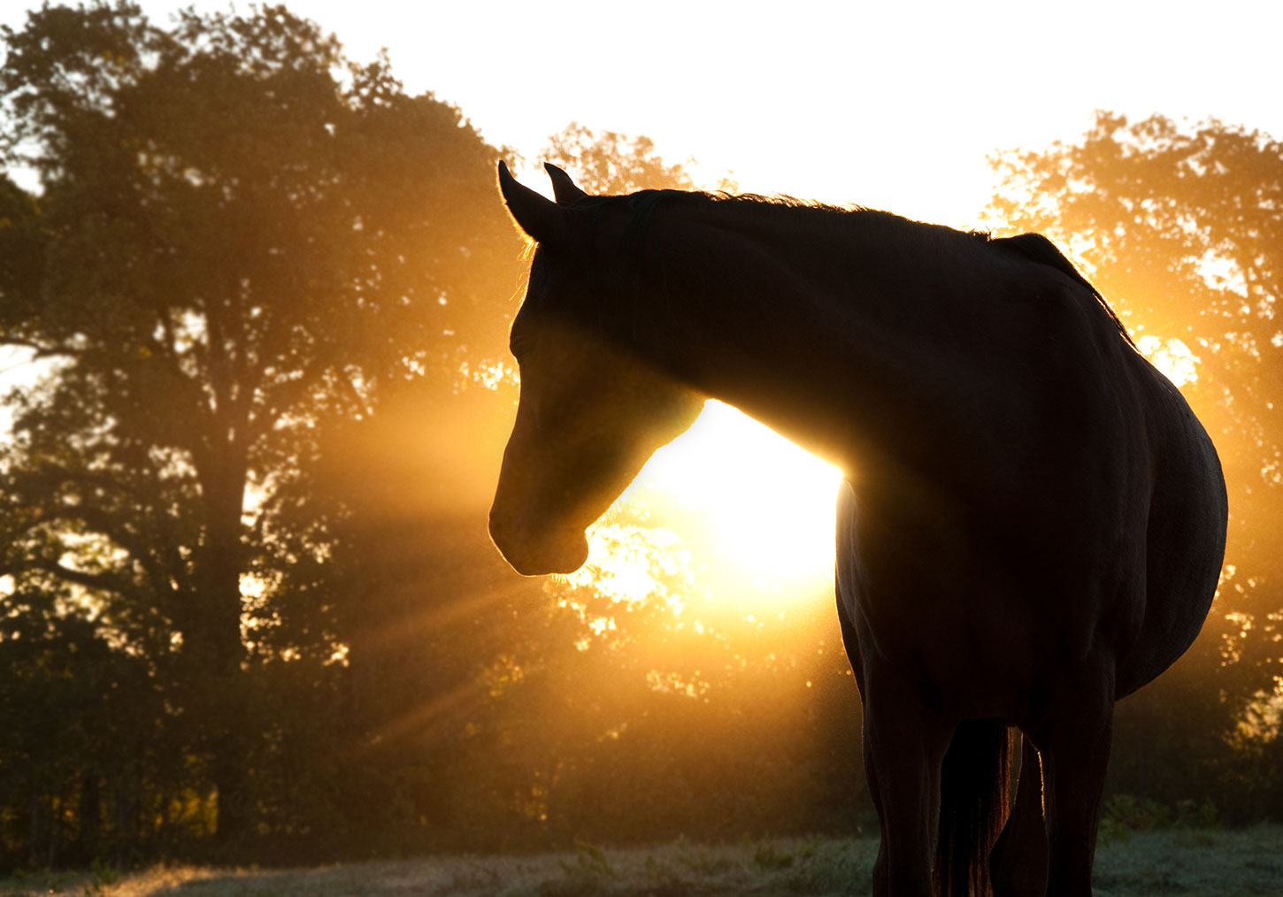 Silhouetted horse with sun