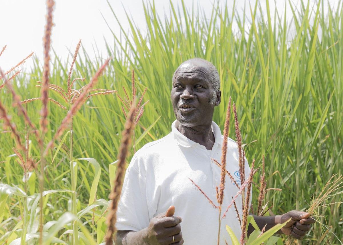 Kenyan farmer in field