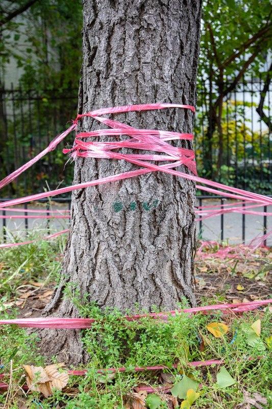Manhattan, Pink Ribbon Garden Web