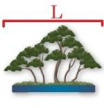 largeur forêt pot
