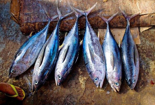 El caso de los atunes 'perdidos', una de las estafas más famosas.