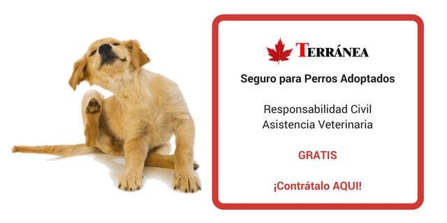 Seguro de Perro Gratis
