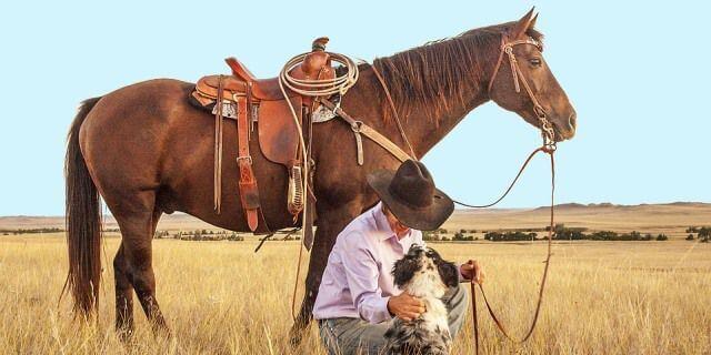 Tipos de monturas para caballos elige la silla de montar for Monturas para caballos