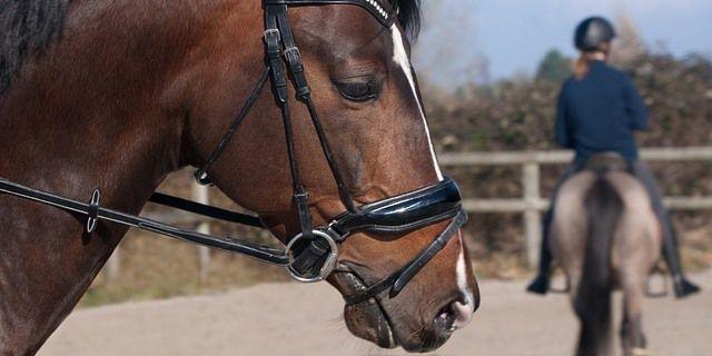 seguros para caballos
