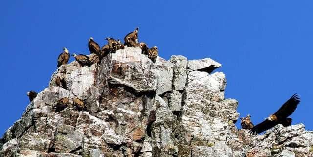 ElParque Nacional de Montfragüe es una buena opción para escaparte este otoño.