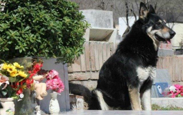 Capitán el perro que ha velado durante una década la tumba de su amo