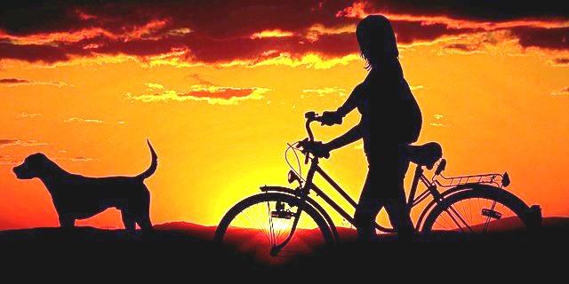 pasear en bici con tu perro puede ser toda una experiencia como en esta foto