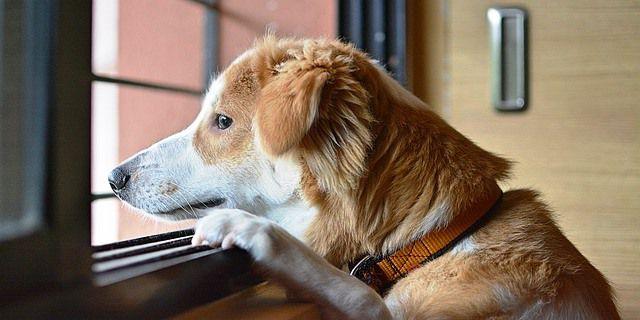 La pérdida por un ser querido también se nota en nuestras mascotas.