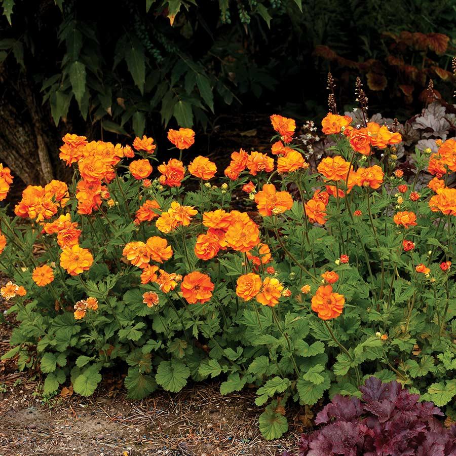 Perennial Shade Plants Zone 6
