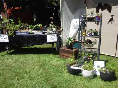 Entally Estate Gardenfest 2017 (1)