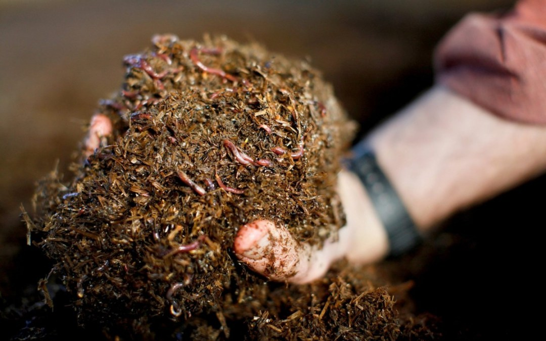 Worms Produce Another Kind of Gold for Growers