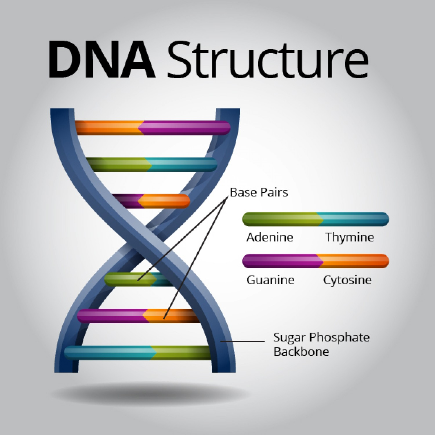DNA Structure Image Two