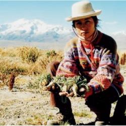 L or des incas
