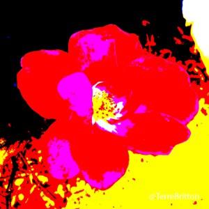 Fall Rose (2013)
