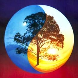 Yin Yang et Arbre de la Vie