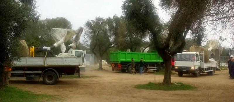 Espianto ulivi sul cantiere Tap