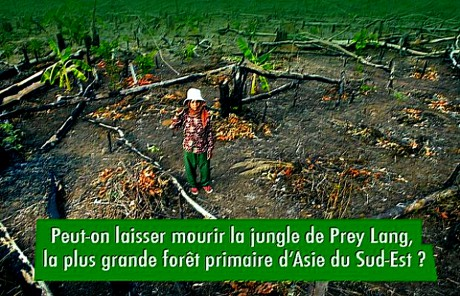 Cambodge : halte à la déforestation de Prey Lang !