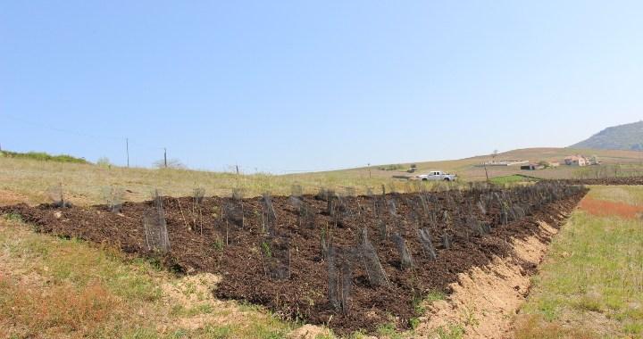 Plantation de haies dans le Beaujolais par Terrestris en février 2020