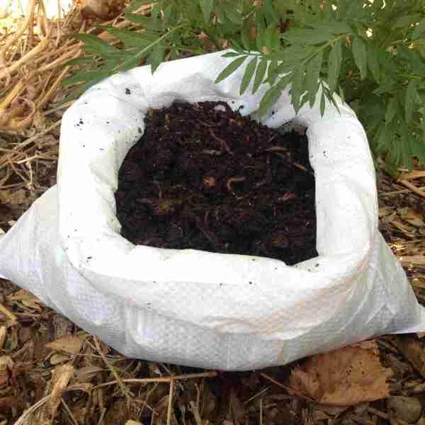 Vers de compost Eisenia foetida achat