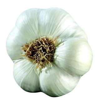 L'ail blanc